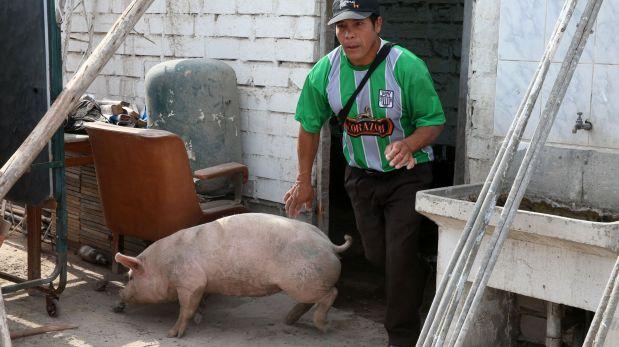 Los animales de Evangelina Chamorro también fueron arrastrados por el huaico en Punta Hermosa. (Foto: Andina / Video: Panamericana)