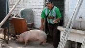 Punta Hermosa: devuelven animales a Evangelina Chamorro