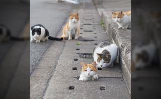Fotógrafo captó a los gatos más divertidos de las alcantarillas