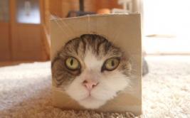 Este gato es el animal más visto en la historia de YouTube