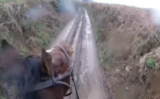 Montó un caballo de carreras retirado y terminó lamentándolo