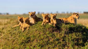 ¿Safari en África? Lo que cuesta cumplir este sueño