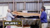 Australia: hallaron 21 tipos de huellas de dinosaurio