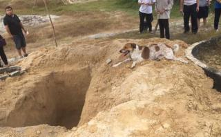 Perro siguió carroza fúnebre de su dueña para despedirla