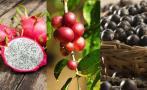 Frutas exóticas, potencial de comercio para la selva peruana