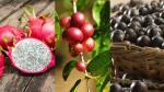 Frutas exóticas, potencial de comercio para la selva peruana - Noticias de importaciones peruanas