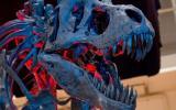 Surge nueva hipótesis sobre la evolución de los dinosaurios