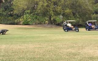 Cocodrilo interrumpió torneo de golf en Estados Unidos