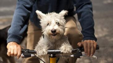 ¿Por qué hay tantas razas de perros en el planeta?
