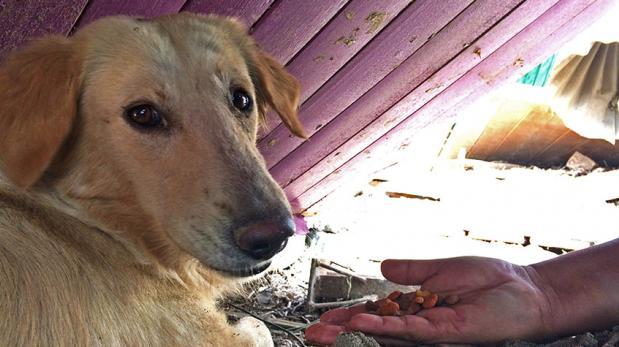 ¿Cómo ayudar a un animal damnificado sin perjudicarlo?