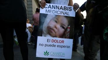 Argentina aprueba el uso medicinal de la marihuana