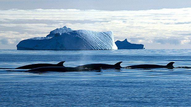 Japón mata 333 ballenas en su cacería anual en el Antártico