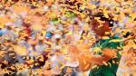 Federer aplastó a Nadal: postales del título del suizo en Miami - Noticias de roger federer