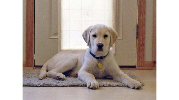 [Foto] ¿Mascota nueva en casa? Consejos prácticos