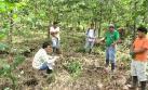Pasco: más de 700 hectáreas de suelos fueron recuperados