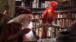 El ave fénix que Dumbledore tiene en su oficina se encuentra en mitos de la antigüedad, incluidos textos de Tácito y Herodoto. (Foto: Warner Bros)