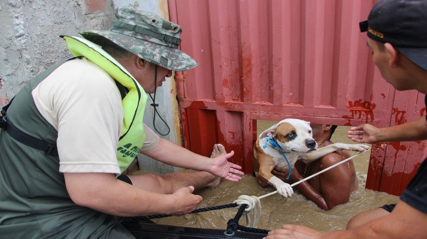 Los agentes también rescataron a mascotas de los damnificados. (Foto: Ralph Zapata / El Comercio)