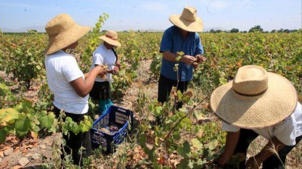 Agroexportación generaría 1.7 millones de puestos de trabajo
