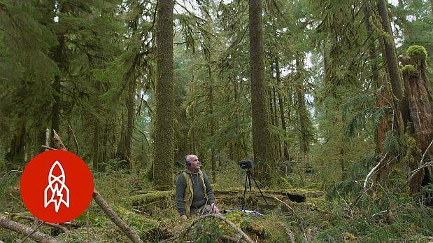 Hombre preserva una pulgada cuadrada de silencio en la selva