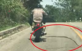 Serpiente atacó a motociclista cuando viajaba a velocidad