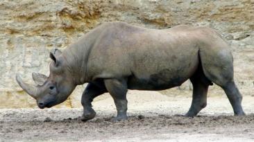 """Día de la Tierra: 7 especies en """"peligro crítico"""" de extinción"""