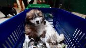 Municipalidad de Lima rescató a 19 cachorros en operativo