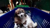 Cachorros rescatados de vendedores necesitan un hogar [FOTOS]