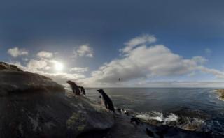 Día mundial del pingüino: amenazados por el cambio climático