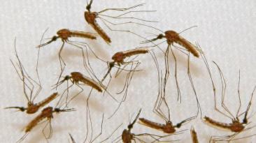 Día Mundial de la Malaria: 10 datos sobre la enfermedad