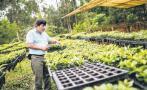 Agroexportaciones crecerían 8,7% pese a El Niño costero