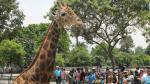 5 lugares para visitar si tus hijos adoran los animales - Noticias de granja villa