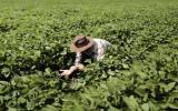 Innovación agrícola para frenar cambio climático