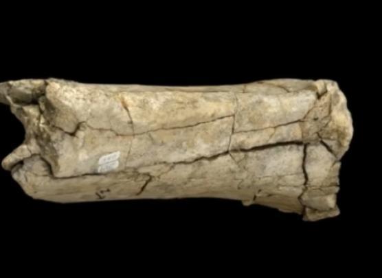 El hombre llegó a América 115.000 años antes de lo pensado