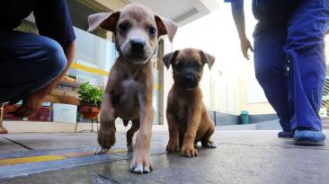 Municipalidad de Lima entrega canes rescatados a nuevos dueños