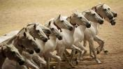 Domesticación del caballo ha empobrecido su diversidad genética