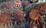 El vinagre podría ayudar a salvar la Gran Barrera de Coral