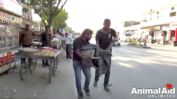 [Foto] Ni la calle ni los gusanos pudieron con ella