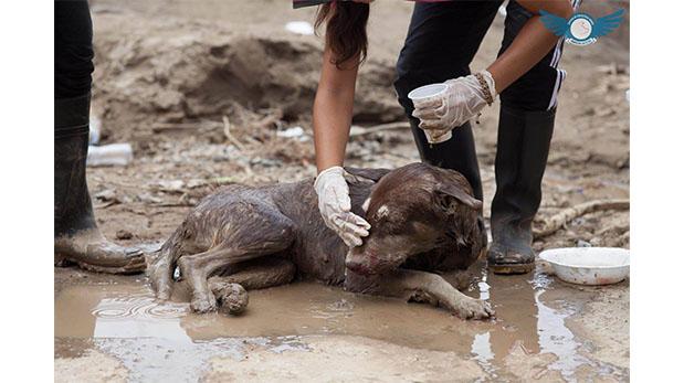 [Foto] Próximas actividades para realizar con tu mascota en Lima