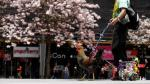 Paquito, el famoso gallo que pasea por las calles de Costa Rica - Noticias de martin herrera