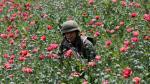 México: La lucha del Ejército contra los cultivos de amapola - Noticias de jesús coronel