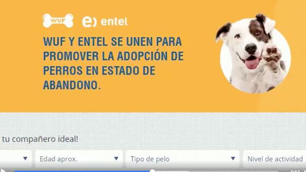 [Foto] Página de venta de perros resultó tener fin social