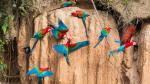 Tambopata y Pacaya Samiria: Guía básica para explorarlas - Noticias de reserva nacional pacaya samiria