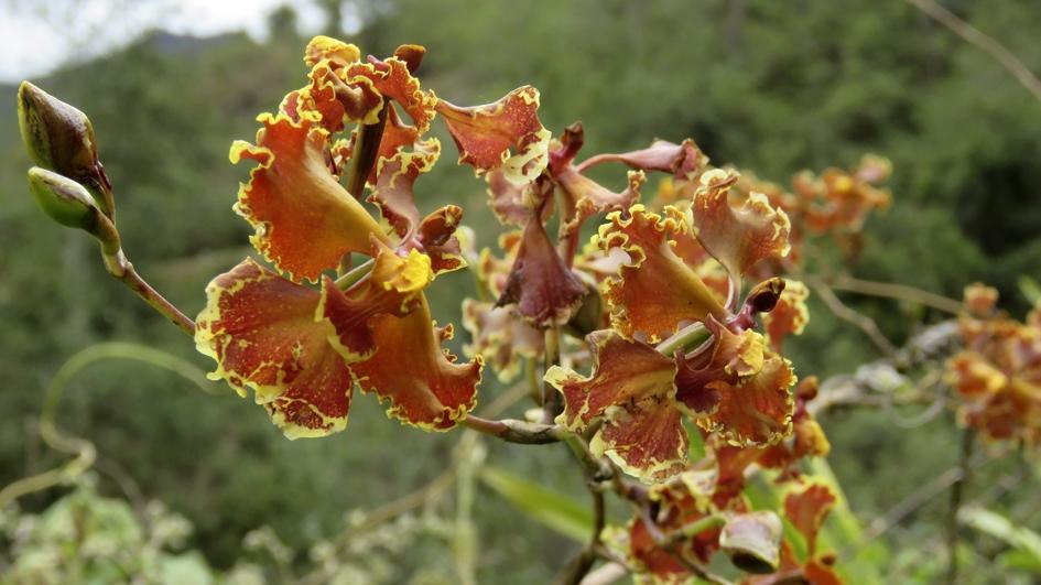 Huiquilla: un espacio natural con más de 200 especies de plantas