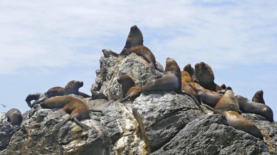 Isla Foca y La Islilla: los últimos parajes del norte del país
