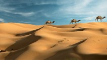Un paseo a camello con Google