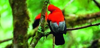 La biodiversidad de Machu Picchu