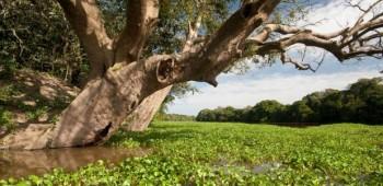 Únete a proteger la Amazonía
