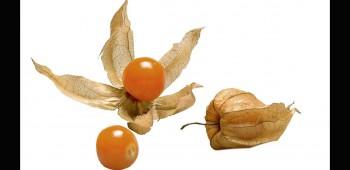 Frutas nativas y sus beneficios