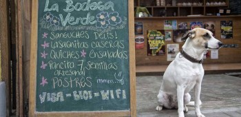 Pet friendly:10 opciones en Lima