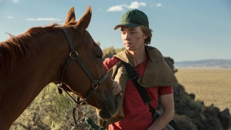 Charlie Thompson, un chico de quince años que queda solo al morir su padre, emprende junto a un caballo de carreras robado un peligroso viaje en busca de su tía, de la cual no tiene noticias desde hace tiempo, y un nuevo hogar.